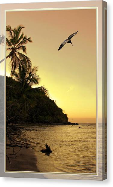 Pelican Sundown Canvas Print