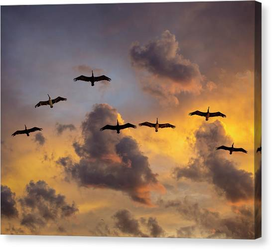 Canvas Print featuring the photograph Pelicans In The Clouds by John Rodrigues