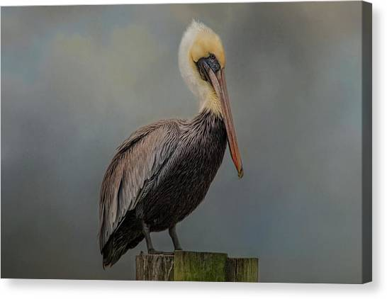 Pelican's Perch Canvas Print