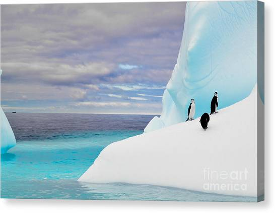 Glacier Bay Canvas Print - Penguins In Iceberg In Antarctica Pole by 2j Architecture