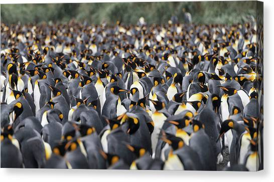 Penguinscape Canvas Print