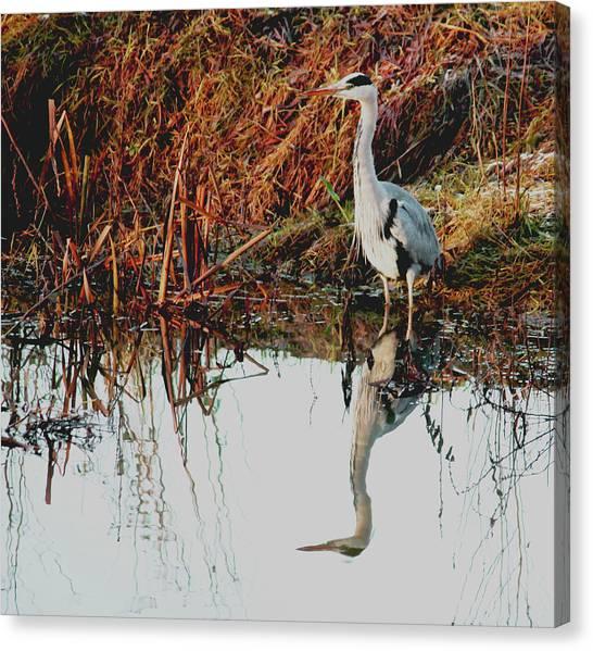 Pensive Heron Canvas Print