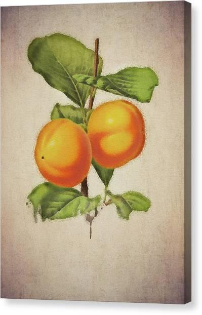 Canvas Print featuring the digital art Persimmon by Jan Keteleer