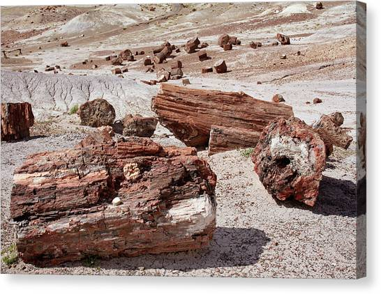 Petrified Forest Canvas Print - Petrified Forest by Images Etc Ltd