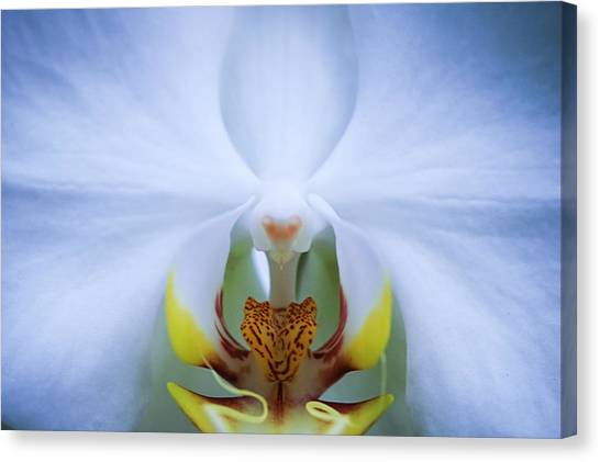 Phalaenopsis Orchid Canvas Print by By Ken Ilio