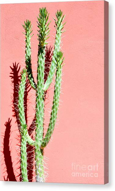 Botany Canvas Print - Photo Picture Of A Tropical Cactus by Underworld