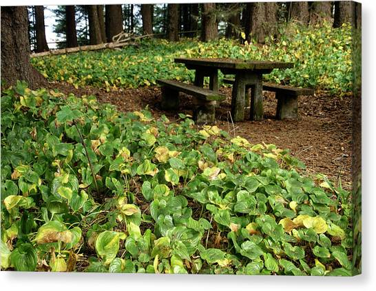 Picnic  Table In The Forest  Canvas Print