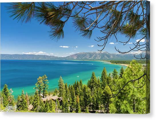 Pine Trees, Lake Tahoe, California, Usa Canvas Print
