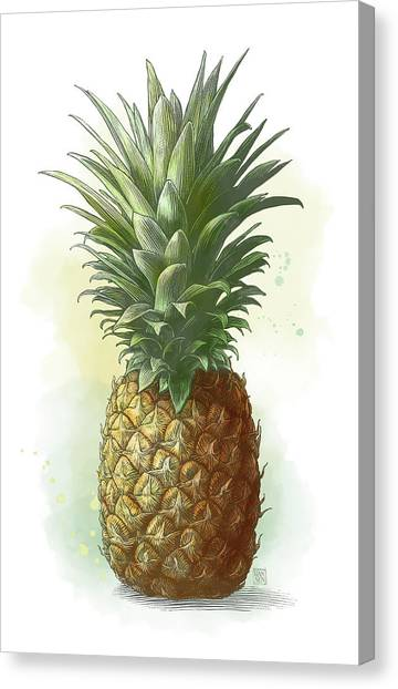 Canvas Print featuring the drawing Pineapple by Clint Hansen
