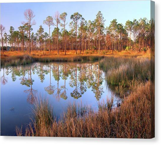 Pines Reflected In Pond Near Piney Canvas Print by Tim Fitzharris/ Minden Pictures