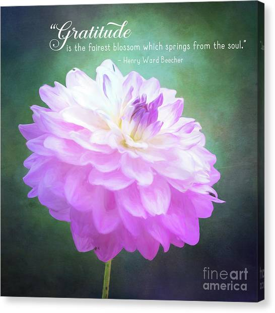 Pink Dahlia Gratitude Artwork Canvas Print