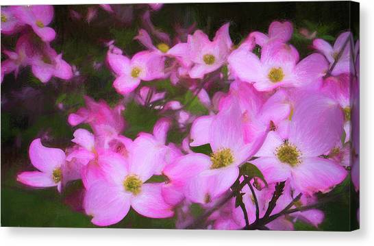 Pink Dogwood Flowers  Canvas Print