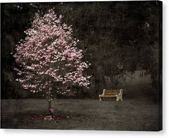 Pink Dogwood Tree And A Bench Canvas Print