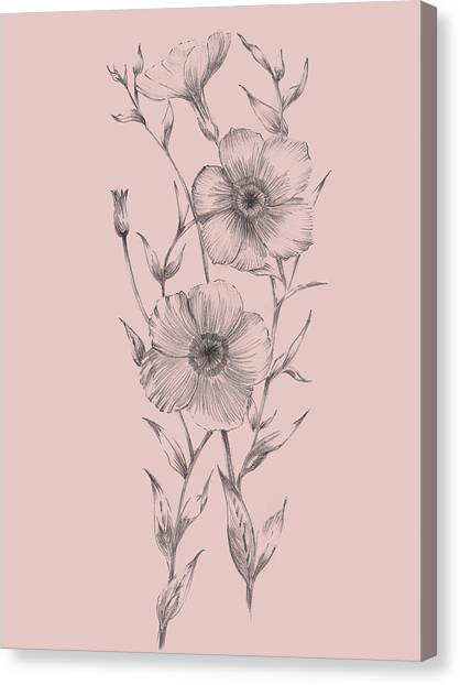 Dahlias Canvas Print - Pink Flower Sketch Illustration I by Naxart Studio