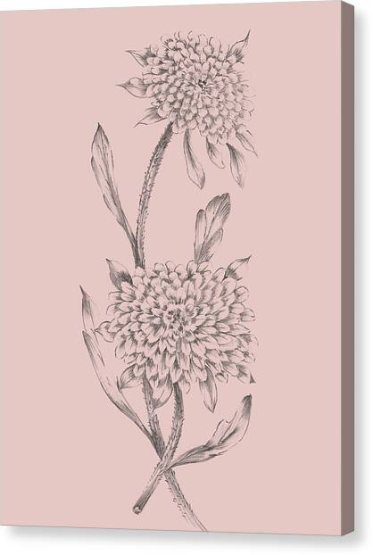 Dahlias Canvas Print - Pink Flower Sketch Illustration II by Naxart Studio