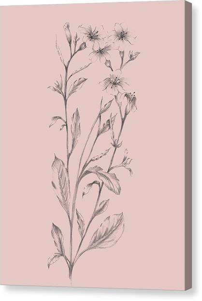 Dahlias Canvas Print - Pink Flower Sketch Illustration by Naxart Studio