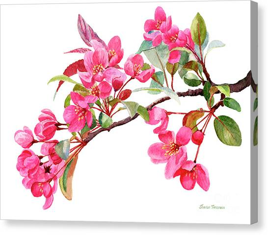 Blooming Tree Canvas Print - Pink Flowering Tree Blossoms by Sharon Freeman
