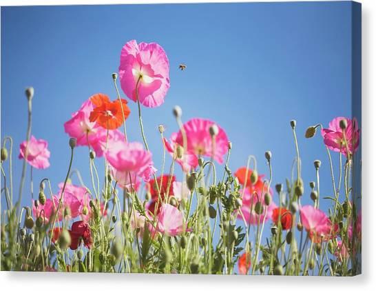 Pink Flowers Against Blue Sky Canvas Print