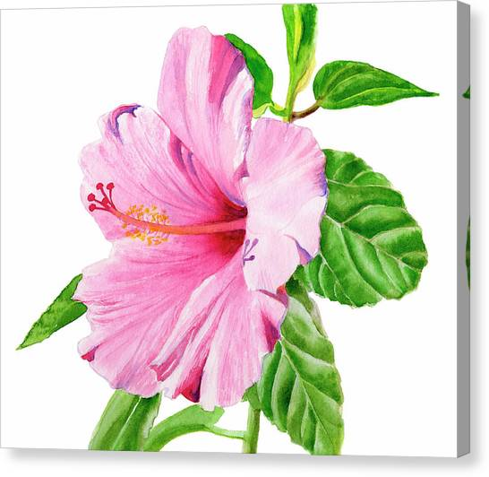 Hibiscus Canvas Print - Pink Hibiscus With White Background by Sharon Freeman