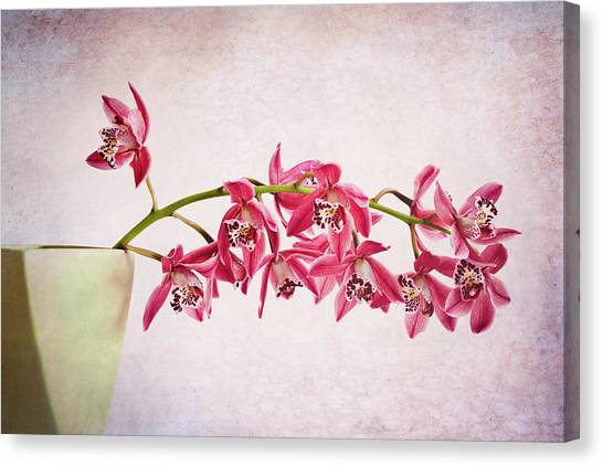 Nottinghamshire Canvas Print - Pink Orchids by Doug Chinnery