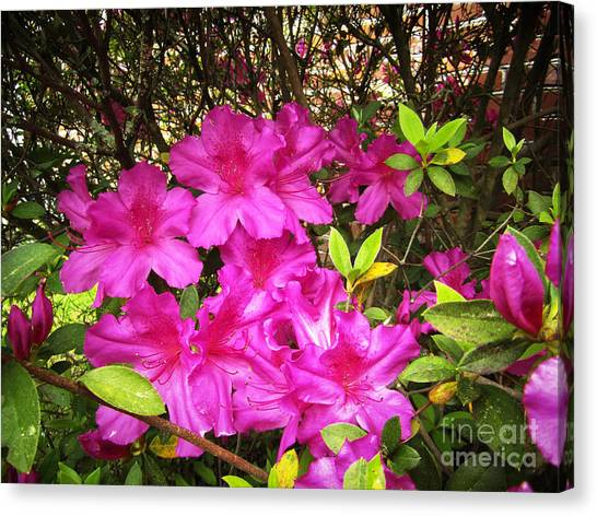 Pink Outside Canvas Print