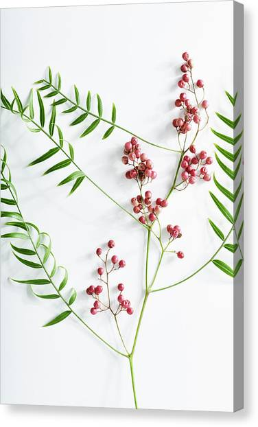 Pink Peppercorn Branch On White Canvas Print by Amy Neunsinger