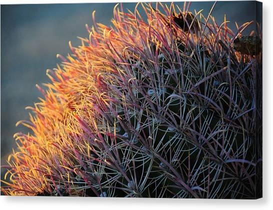 Pink Prickly Cactus Canvas Print