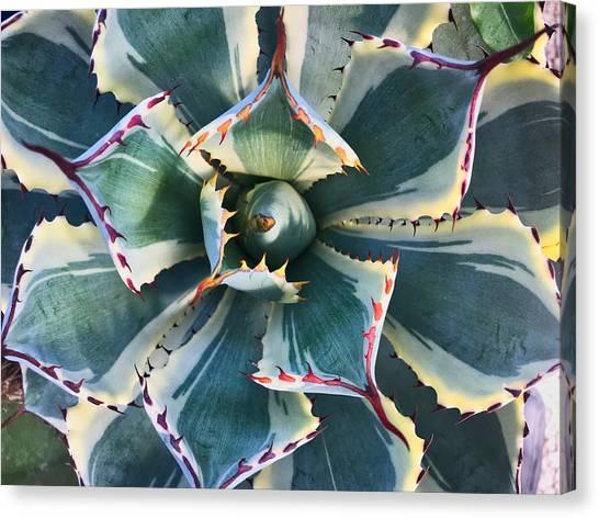 Pinwheel Succulent Canvas Print