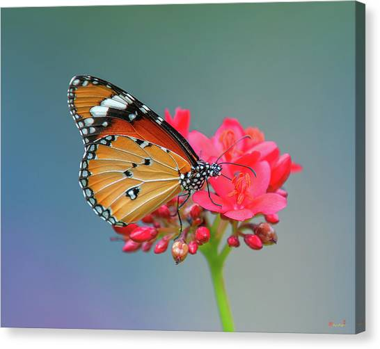 Plain Tiger Or African Monarch Butterfly Dthn0246 Canvas Print