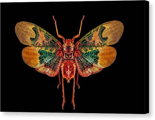 Planthopper Lanternfly Canvas Print