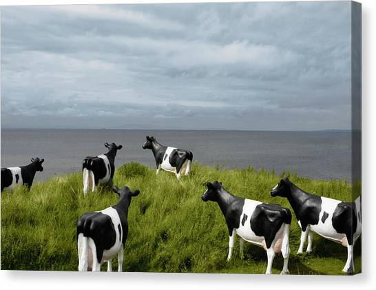 Plastic Cows Looking At The Sky Canvas Print