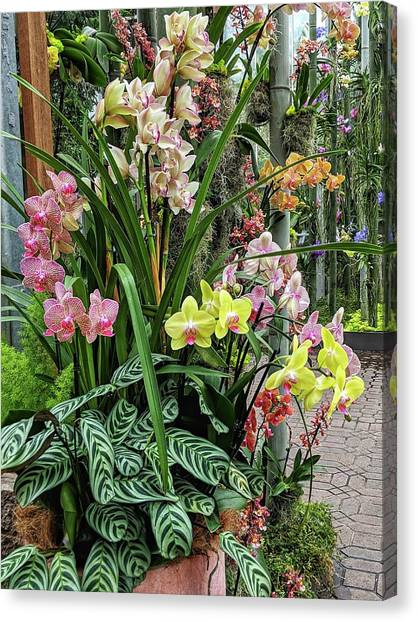 Plentiful Orchids Canvas Print