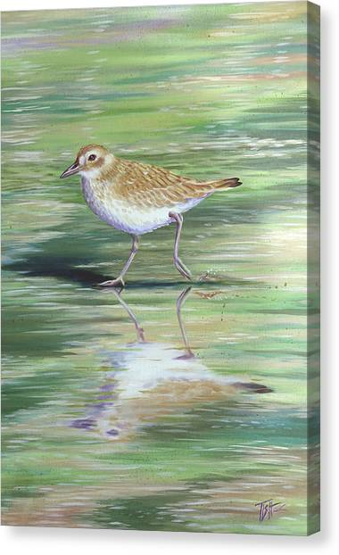 Plover Reflections Canvas Print