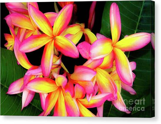 Plumeria Flowers - Tropic Hawaii Canvas Print by D Davila