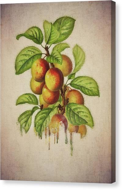 Canvas Print featuring the digital art Plums by Jan Keteleer