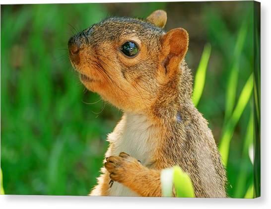 Pondering Squirrel Canvas Print