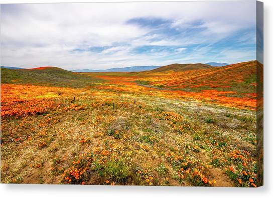 Poppies As Far As The Eye Can See Canvas Print