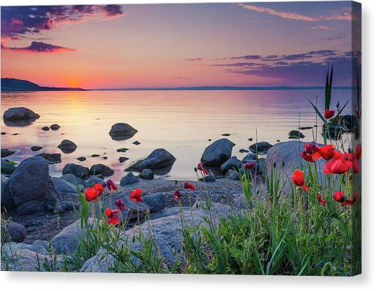 Poppies By The Sea Canvas Print