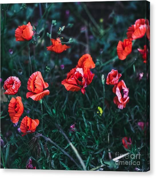 Present Canvas Print - Poppies In The Field. Minimal Style by Evgeniya Porechenskaya