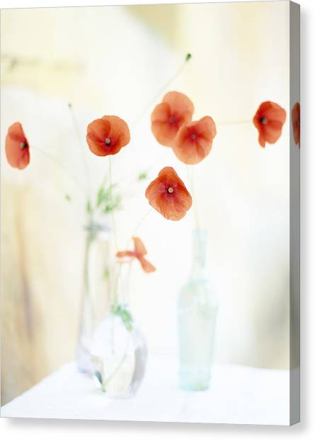 Vase Of Flowers Canvas Print - Poppies In Vases by Victoria Pearson