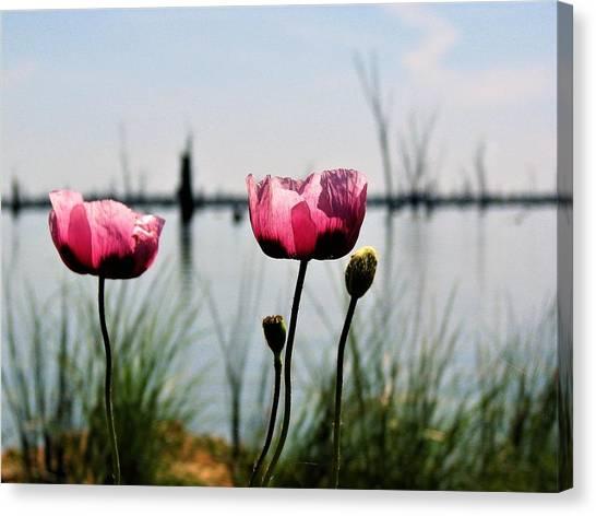 Poppies On Lake Mulwala 2 Canvas Print
