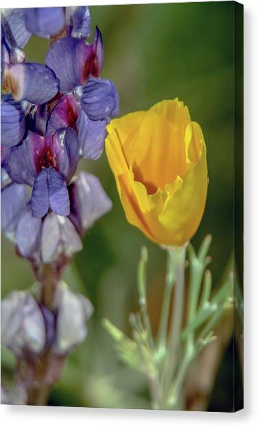 Poppy And Mountain Lupine 5615-030519 Canvas Print