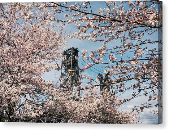 Portland Cherry Blossoms Canvas Print