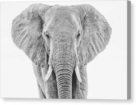 Portrait Of An African Elephant Bull In Monochrome Canvas Print
