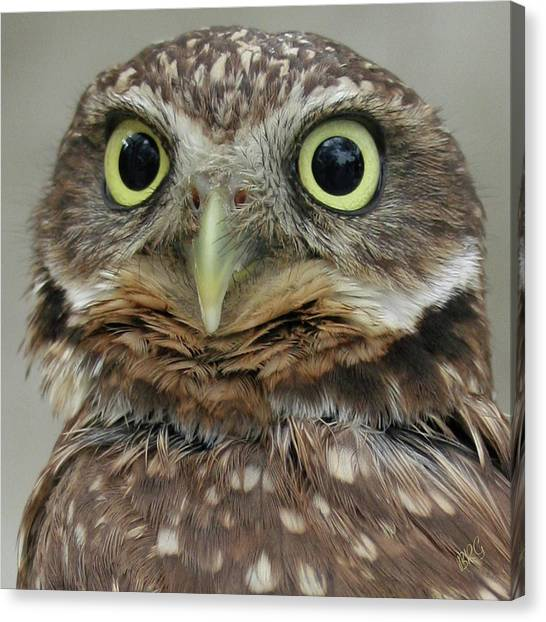 Portrait Of Burrowing Owl Canvas Print
