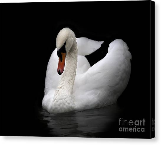 Swan Canvas Print - Portrait Of Whooping Swan, Isolated On by Andamanec