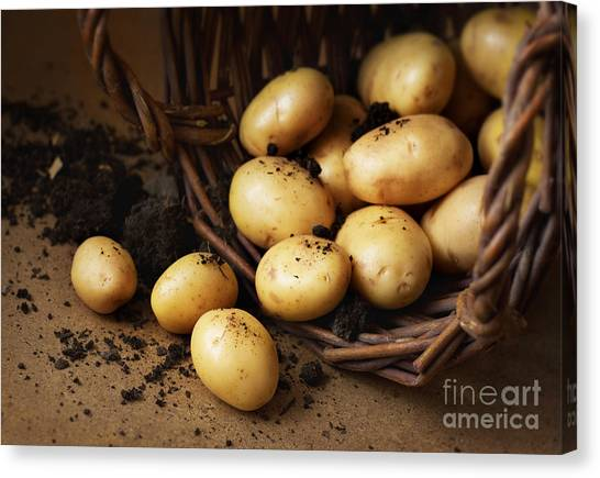 Cottage Style Canvas Print - Potatoes In A Wicker Basket With Soil by Pinkyone