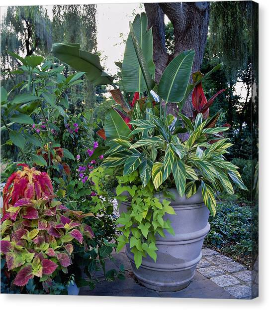 Potted Plants Including Bird Of Canvas Print