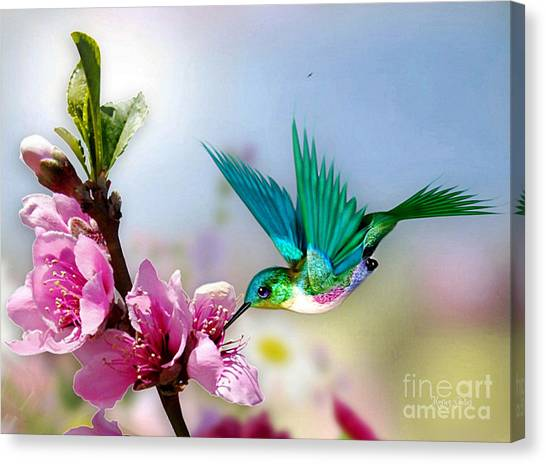 Pretty Hummingbird Canvas Print