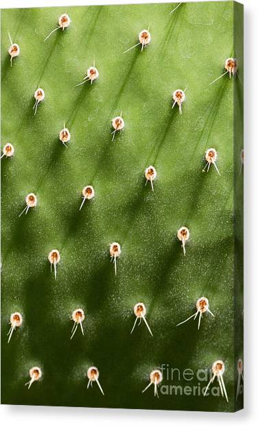 Prickly Pear Cactus Close Up Canvas Print by Sumikophoto
